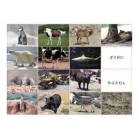 多目的言語カードセット動物編CD付KK0491