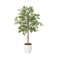 人工樹木 フィッカスベンジャミナ 90832