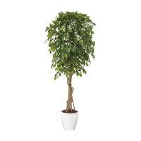 人工樹木 ベンジャミナリアナ 90833
